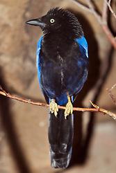 03 July 2006:   Bird in an exhibit at the Henry Doorly Zoo in Omaha Nebraska