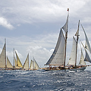 Coral of Cows.<br />
