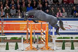 066, Mr Cornet VG<br /> KWPN hengstenkeuring - 's Hertogenbosch 2020<br /> © Hippo Foto - Leanjo de Koster<br /> 29/01/2020