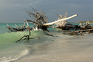 Photos of Beer Can Island on Long Boat Key.