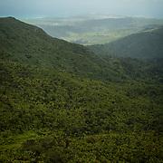 El Yunque National Forest, Puerto Rico.