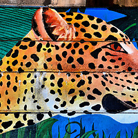 Amur Leopard Mural Near Philadelphia Zoo in Philadelphia, Pennsylvania<br />
