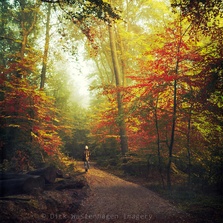 Man walking through a sunlit fall forest.
