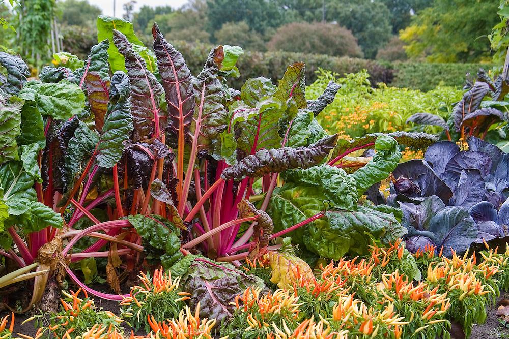 Kitchen garden in autumn greenfuse photos garden farm for Ornamental vegetable garden design