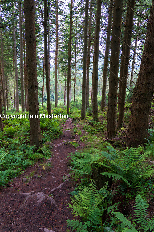 Woodland mountain bike trail downhill in Inver Wood above The Hermitage in Perthshire, Scotland , Uk
