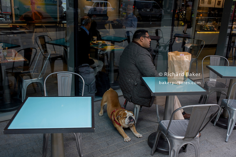 A Bulldog stretches beneath his owner in a central London cafe.
