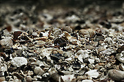 nature photography: bed of sea shells in natural tones