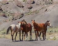 Free-ranging horse band resting on barren ground  surrounded by badlands in north-western New Mexico, © 2015 David A. Ponton