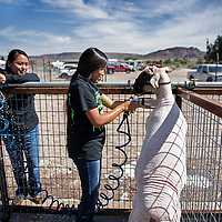 Aniyah Dahozy, 12, washing her lamb, getting ready to show the lamb later in the day while her mom Brittney Barney watches, Friday, August, 31, 2018 at the Bi-County Fair in Prewitt.