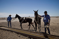 Brunette Downs Cattle Station is situated on the Barkley tablelands in Australia's Northern Territory. One of Australia's largest cattle stations..Watering horses after Drafting Cattle separating them into different areas of the yard.