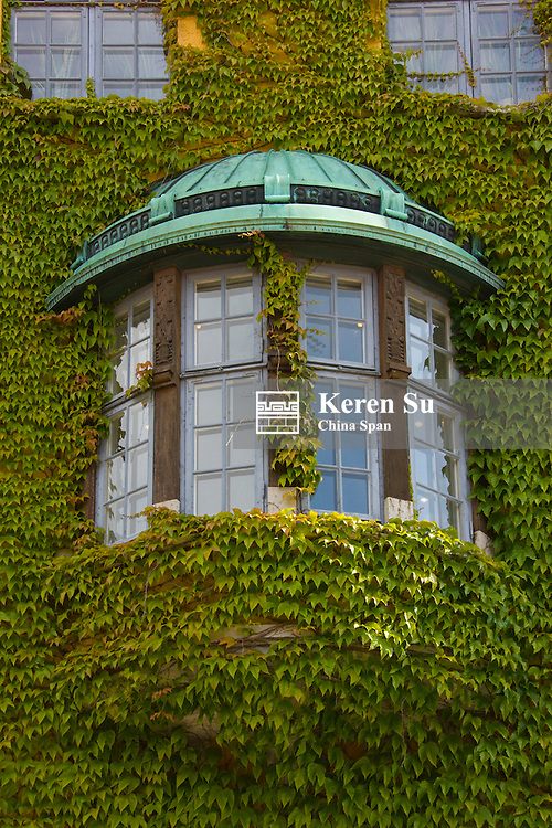 Medieval houses, wall covered by ivy, Visby, Gotland Island, Sweden