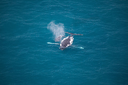 A Humpback whale cow and calf off Willie Creek on the Kimberley coast.