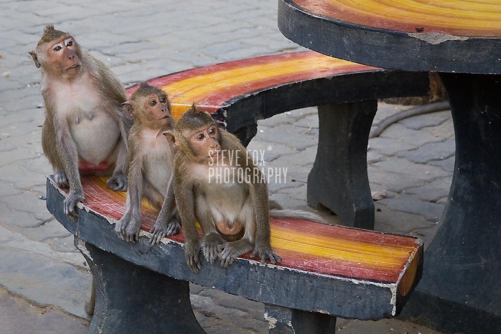 Three monkeys look on, Phetchaburi, Thailand