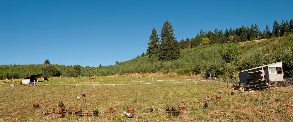 Big Table Farm. Gaston, Willamette Valley, Oregon