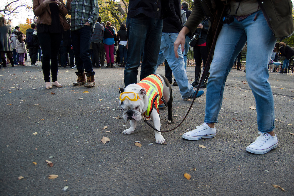 Tompkins Square Park Dog Parade