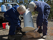 Biologist Drew Lee and volunteer Moira Graham from the Save The Tassie Devil program transferring a wild Tasmanian Devil from a trap to a sack, so that it can be checked for Devil Facial Tumour Disease - it turns out to be free of the disease, and is released back into the wild.  DFTD is contagious cancer that scientists are only beginning to understand, but has spread rapidly through the population, leaving the devil listed as endangered. In December 2009, it was announced that the disease may be related a peripheral nerve cell, called the Schwann cell, which has led some hopes for preserving the devil, at least in terms of quarantine insurance populations. The scientists are trapping and monitoring the animals here on the Forestier Peninsula as part of a programme to control the further spread of the disease and to create insurance populations.
