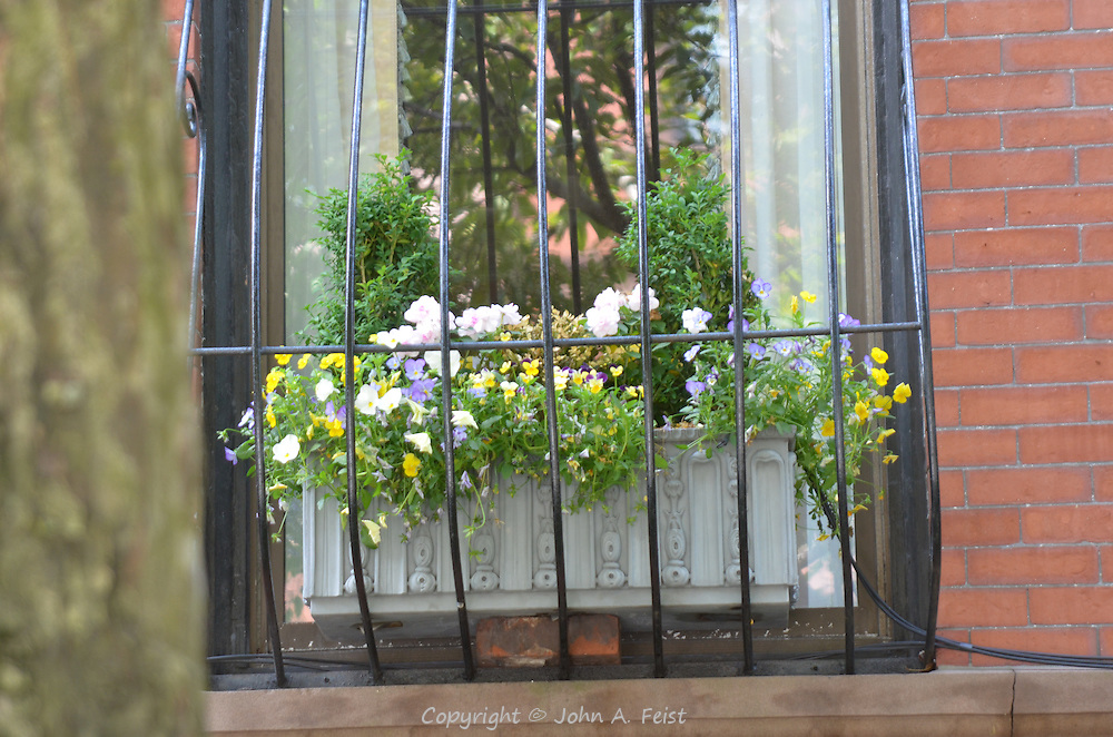 A window box in bloom in the Back Bay section of Boston, MA