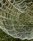 VALLE GRANDE FOG, DEW, WILDFLOWERS, ORB WEBS
