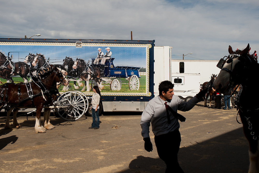 Clydesdales in the parking lot.