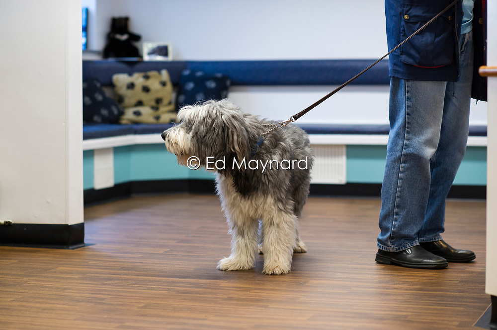 Rushcliffe Veterinary Centre, West Bridgford, Nottingham NG2 7LR.<br />