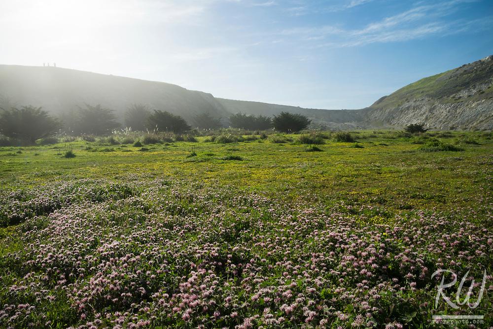 Pacifica Spring Wildflowers, California
