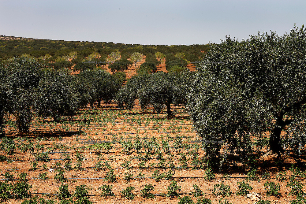 A businessman drilled his own bore whole in order to get drinking water to the surface. Surrounding fields are provided with by a irrigation system to grow vegetables in a commercial manner. But beyound this little area all fruits and vegetables reply on rain water. Since it&acute;s very dry since the last winter in the region farmers expect a poor harvest of olives, oranges and figs which is going to affect peoples living condions as well.<br />