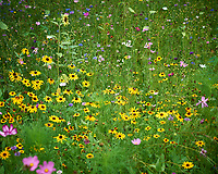 Backyard Summertime Nature in New Jersey. Image taken with a Nikon D5 camera and 80-400 mm VRII lens