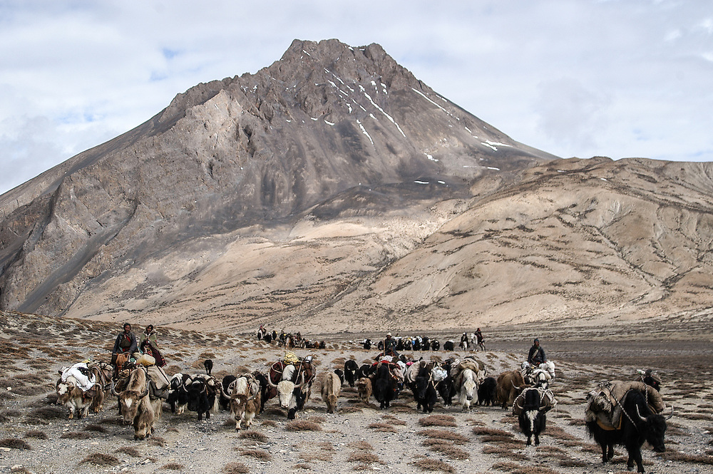 Ladakh's Karnak nomads moving pastures in during the summer of 2005.