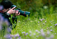 Photographer photographing a flower