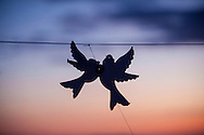 Bird, Paper, Cut Out, Decoration, Fragility, Silhouette, Twilight,