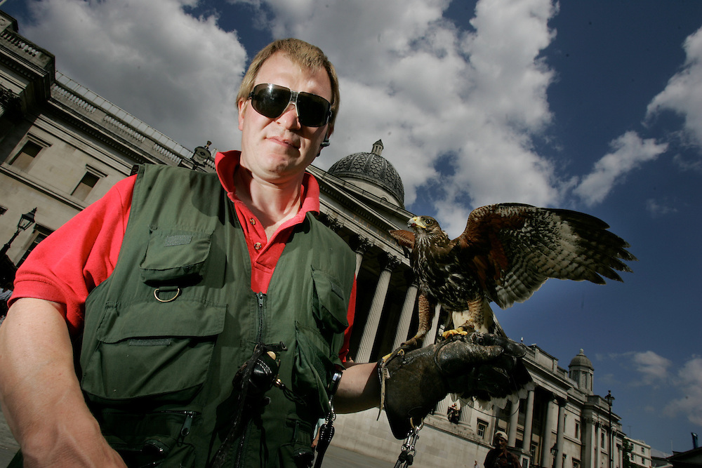 "MArk Bigwood, 42 from NBC bird solutions is the trainer and handler for ""Arrow"" an 18 month old Harris Hawk (known as Bay Hawk in USA). Mark was brought in to reduce the pigeon menace in Trafalgar Square, London, England. Pigeons plague the square because of the high numbers of tourists who feed the birds. Pigeons produce enormous amounts of foul smelling dung that makes the square slippery under foot. 7 days a week Arrow or one of 10 other birds, swoops amongst the pigeons and frightens them away it has reduced pigeon numbers dramatically in the last 3 years."