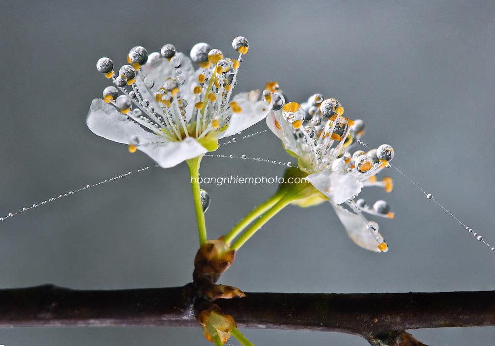 Vietnam Images-flower-nature-Sapa -Hoàng thế Nhiệm