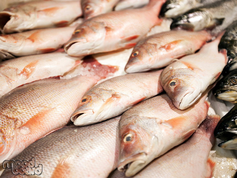 Close-up of freshly caught fishes in market