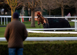 A spectator watches horses in the pre parade ring at Kempton Park Racecourse, Esher.