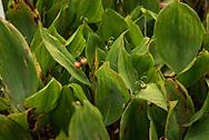 Giftpflanzen im Botanischen Garten Hamburg.