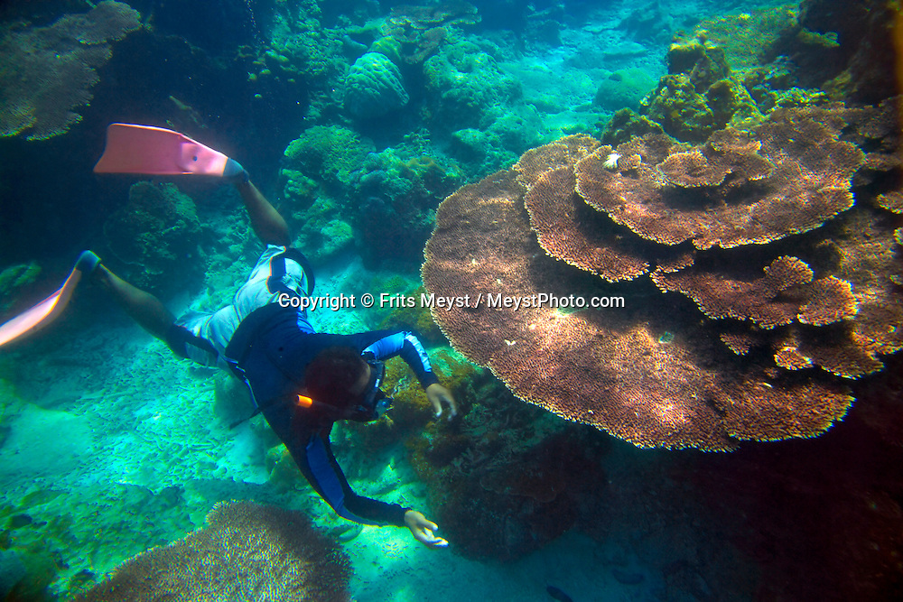 Pulau Besar, Perhentian Islands, Malaysia, April 2006.  A snorkler checks for fish under a table coral. diving off the Perhentian Islands one can see lots of big and small marine life and various sorts of hard and soft corals. Photo by Frits Meyst/Adventure4ever.com