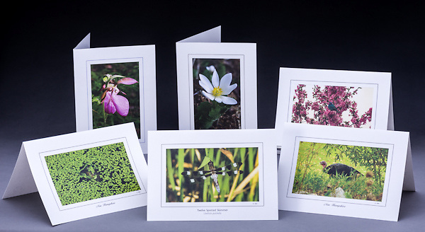 This set includes six cards, one of each:  green frog, twelve spotted skimmer, turkey, pink lady's slipper, bloodroot, and indigo bunting.<br />