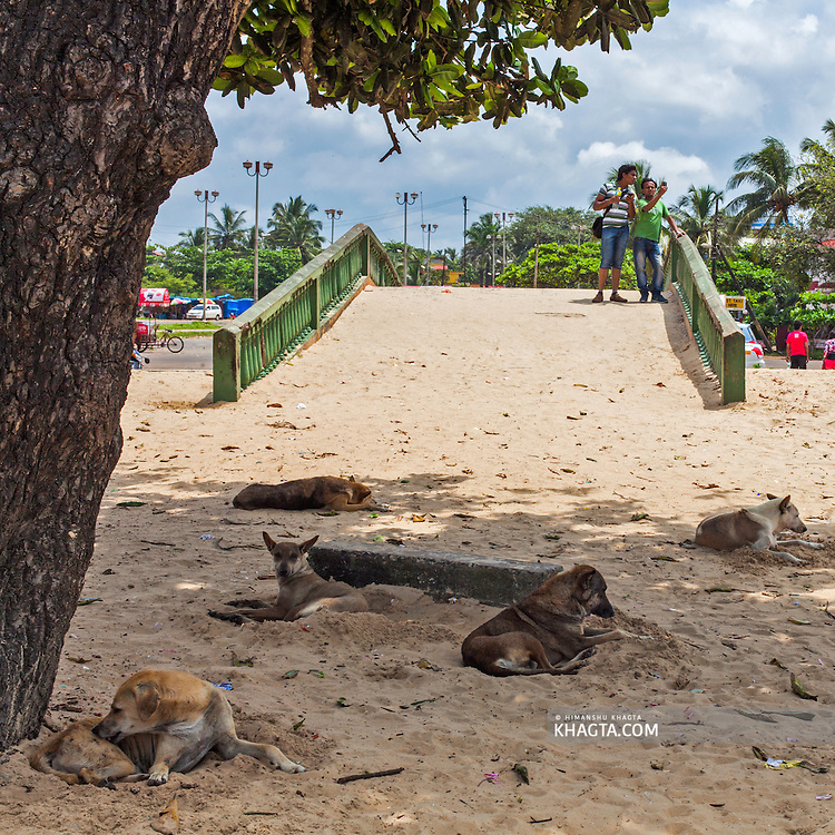 Tourists take pictures with their cellphone and dogs resting under the shade of a tree in Colva Beach, Goa