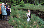 BEL, Belgium, Eastbelgium, Hautes Fagnes, Hohes Venn, walkers, nature walking tour, nature guide, former peat digging place.....BEL, Belgien, Ostbelgien, Hohes Venn, Wanderer, Naturfuehrer, naturkundliche Wanderung, ehemalige Torfabbaustelle....... ..
