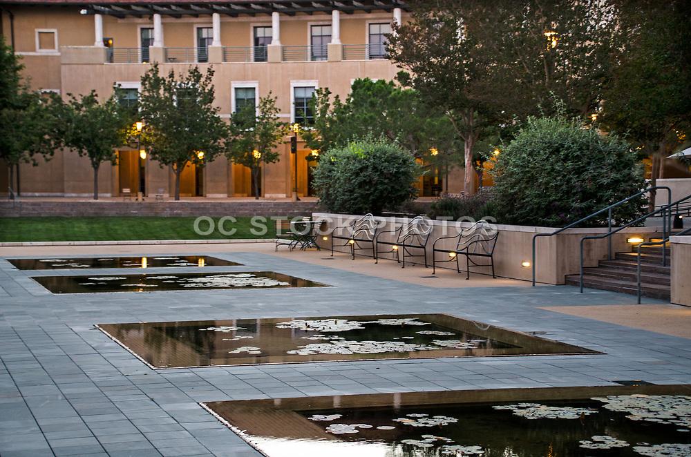 Lily Ponds and Ikeda Library at Soka University