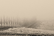 Foggy Winter Scene at Long Shadows Vintners in Walla Walla, Washington.