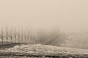 Foggy Winter Scene at Long Shadows Vintners in Walla Walla, Washington.