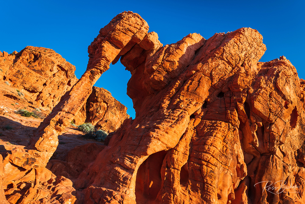 Morning light on Elephant Rock, Valley of Fire State Park, Nevada USA