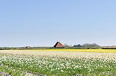 Den Hoorn, Texel, Noord Holland, Netherlands