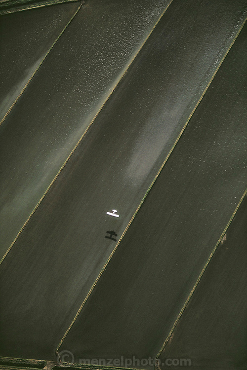Crop dusting. Seeding rice fields in Richvale, California, USA. Laser leveled fields. Seeding by airplane.