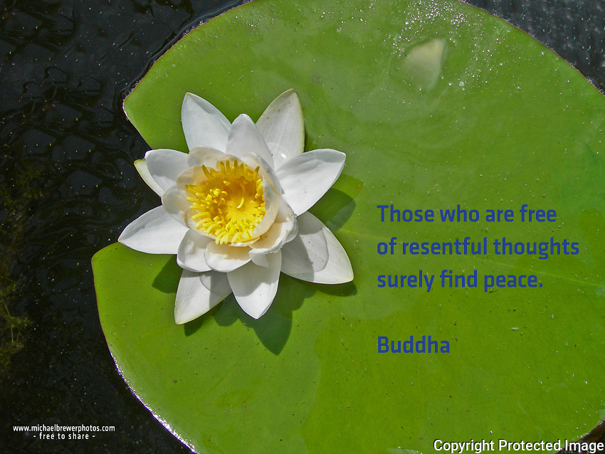 Quote:  Those who are free of resentful thoughts surely find peace.  By Buddha.  Meme.