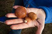 photo essay: Mushroom hunt