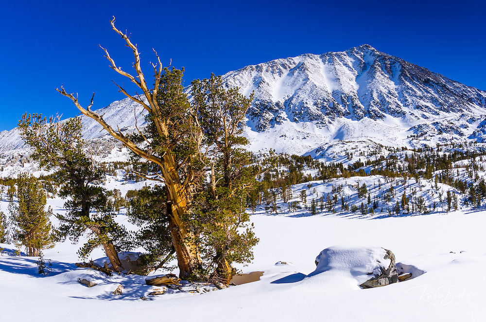 Mount Morgan in winter, John Muir Wilderness, Sierra Nevada Mountains, California  USA