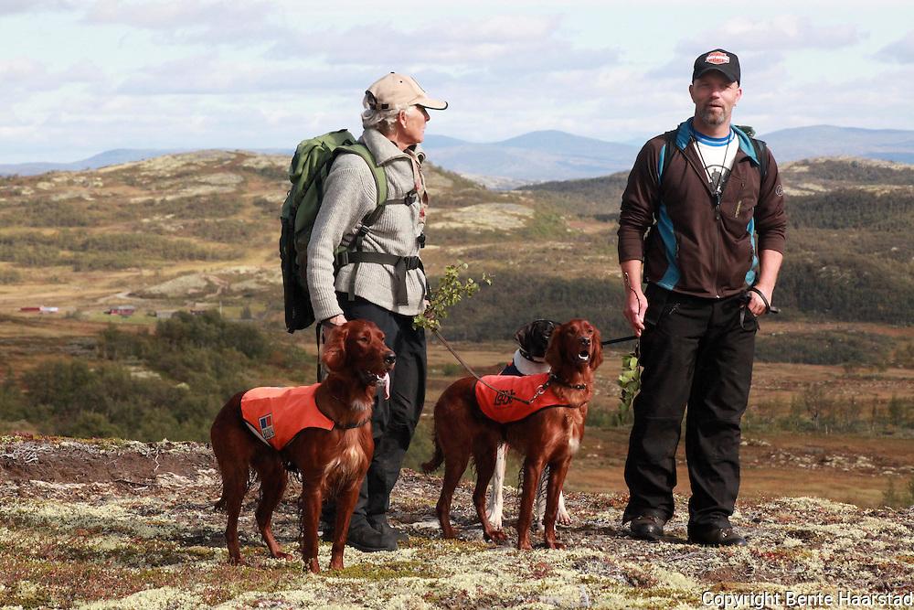 Field trial for bird hunting dogs in Norway. Jaktprøve, høyfjellsprøve, i Holtålen i Sør-Trøndelag,