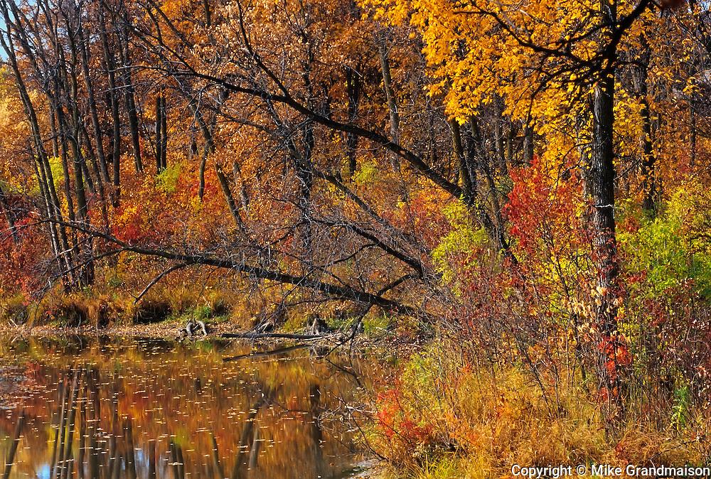 Autumn along the Seine River<br /> Winnipeg<br /> Manitoba<br /> Canada